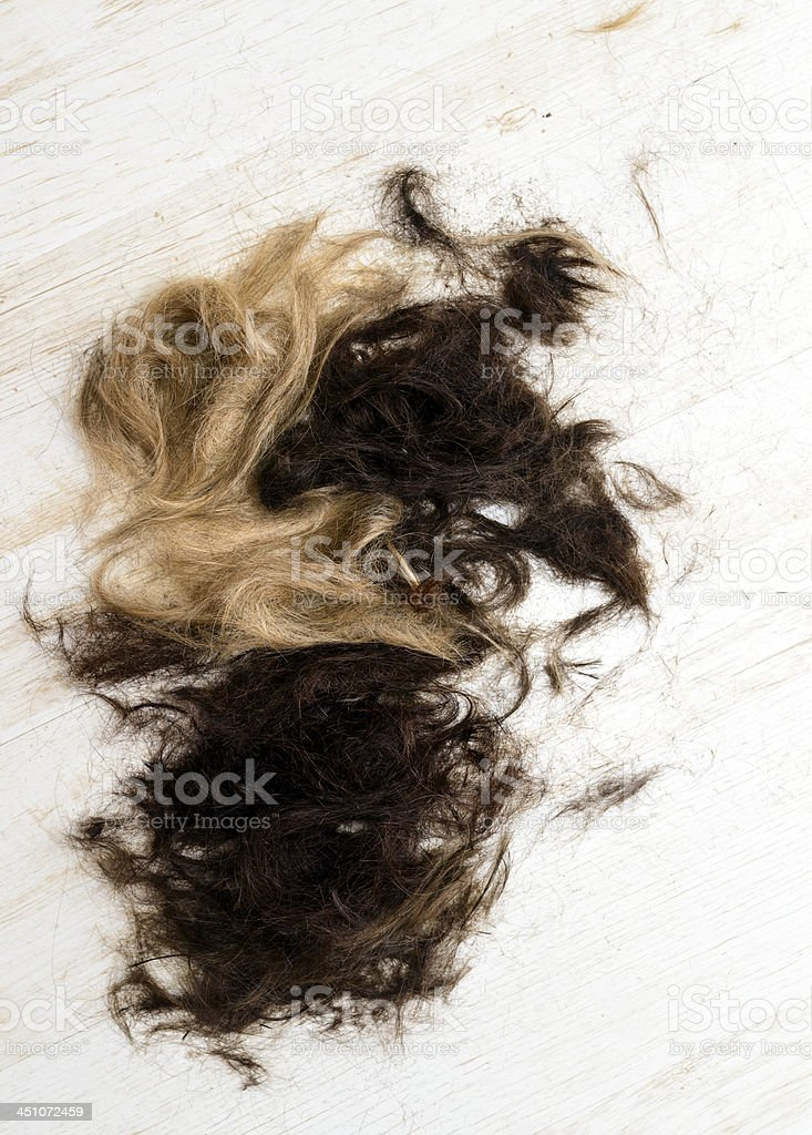 brown and blond hair stock photo