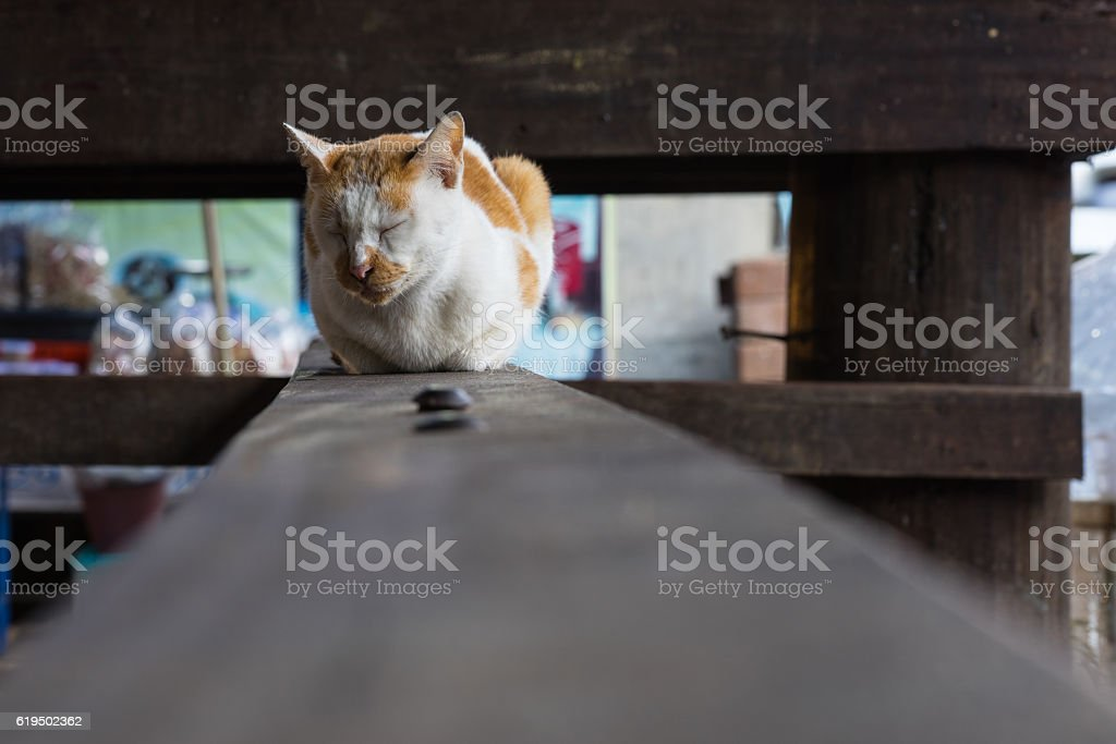 Brown and white cat sleeping on a wooden board royalty-free stock photo