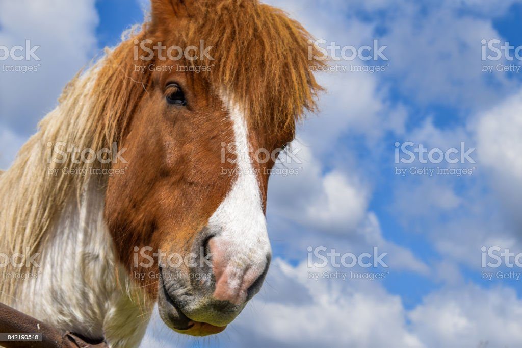 Brown and white horse stock photo