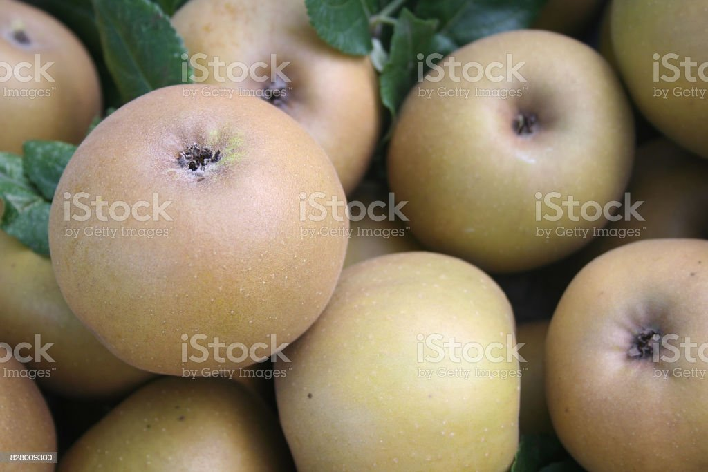 Brown apples from Italy stock photo