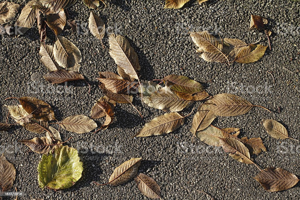 Scattering of brown autumn leaves on tarmacadam royalty-free stock photo