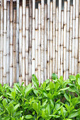 Brown bamboo wood fence pattern and background