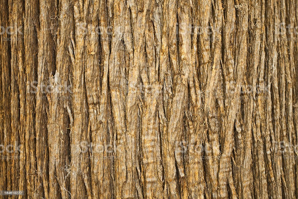 Brown Bark of Tree, Natural Pattern stock photo