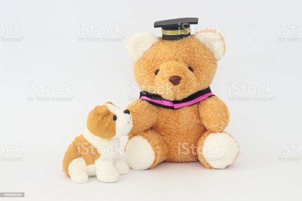 A brown bear wearing a graduation cap and a brownish white dog doll on a white background. stock photo