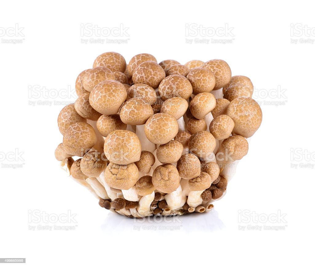 brown beech mushroom isolated on white background stock photo