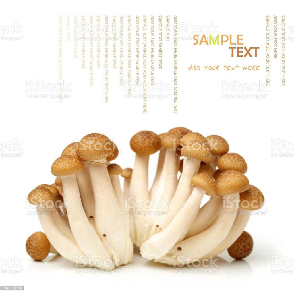 brown beech mushrooms (Hypsizygus marmoreus) on White Background stock photo