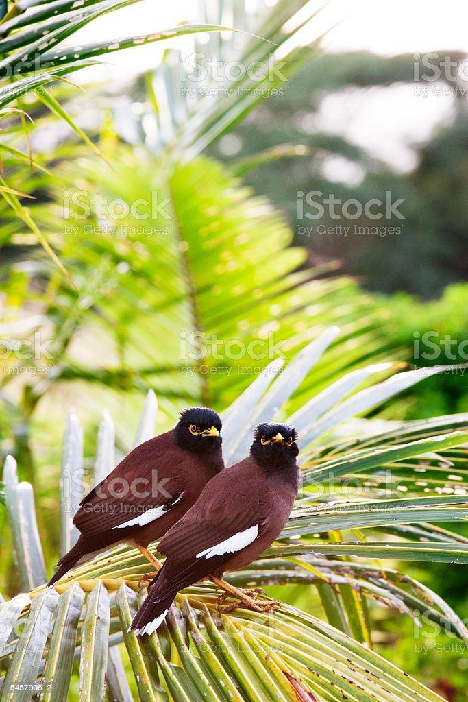 Brown birds stock photo