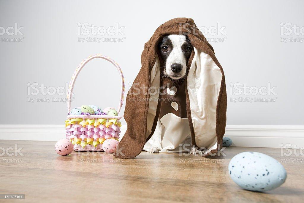 Brown Bunny Dog stock photo
