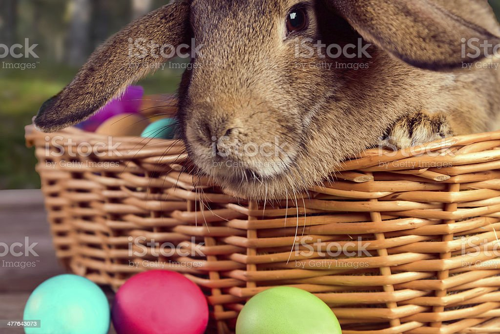 Brown bunny in a basket outdoor royalty-free stock photo