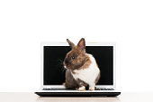 Brown bunny sitting on laptop