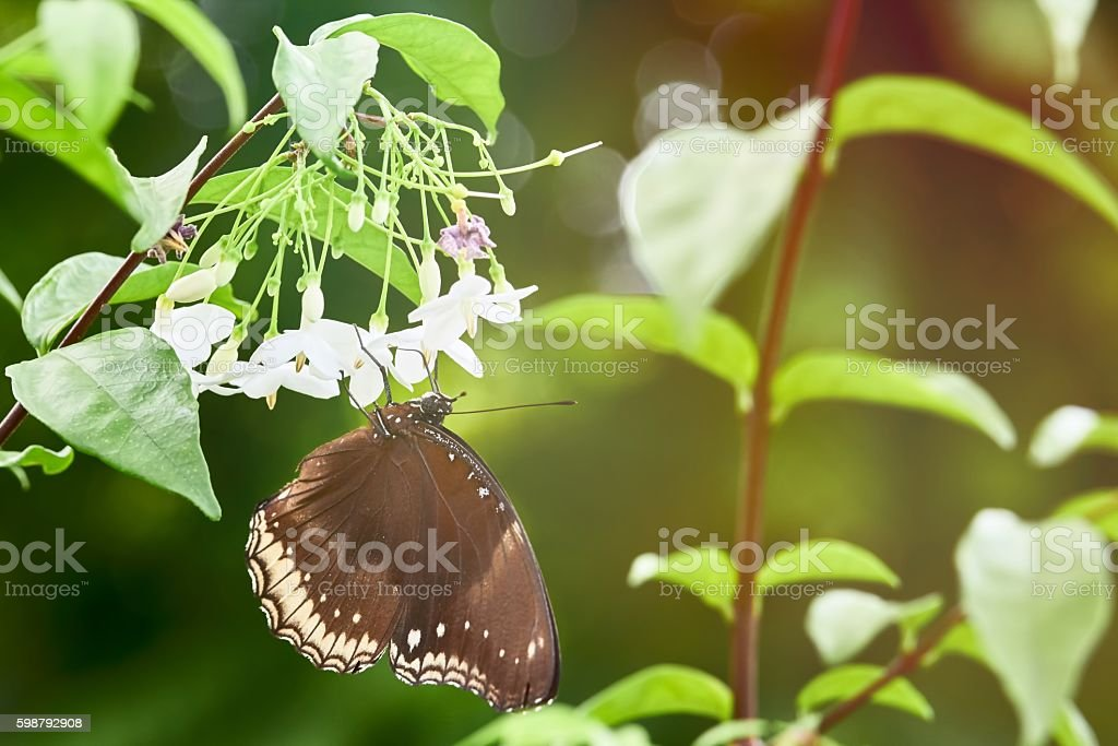 Brown butterfly in nature stock photo