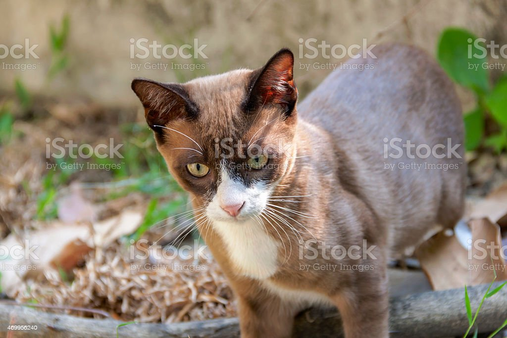 Brown cat curious looking royalty-free stock photo