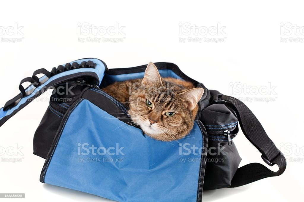Brown cat in blue, black pet carrier isolated on white royalty-free stock photo