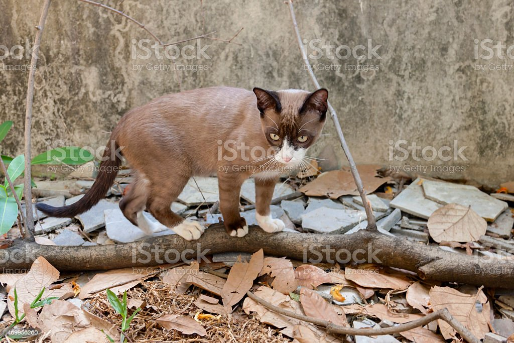 Brown cat on the branch royalty-free stock photo