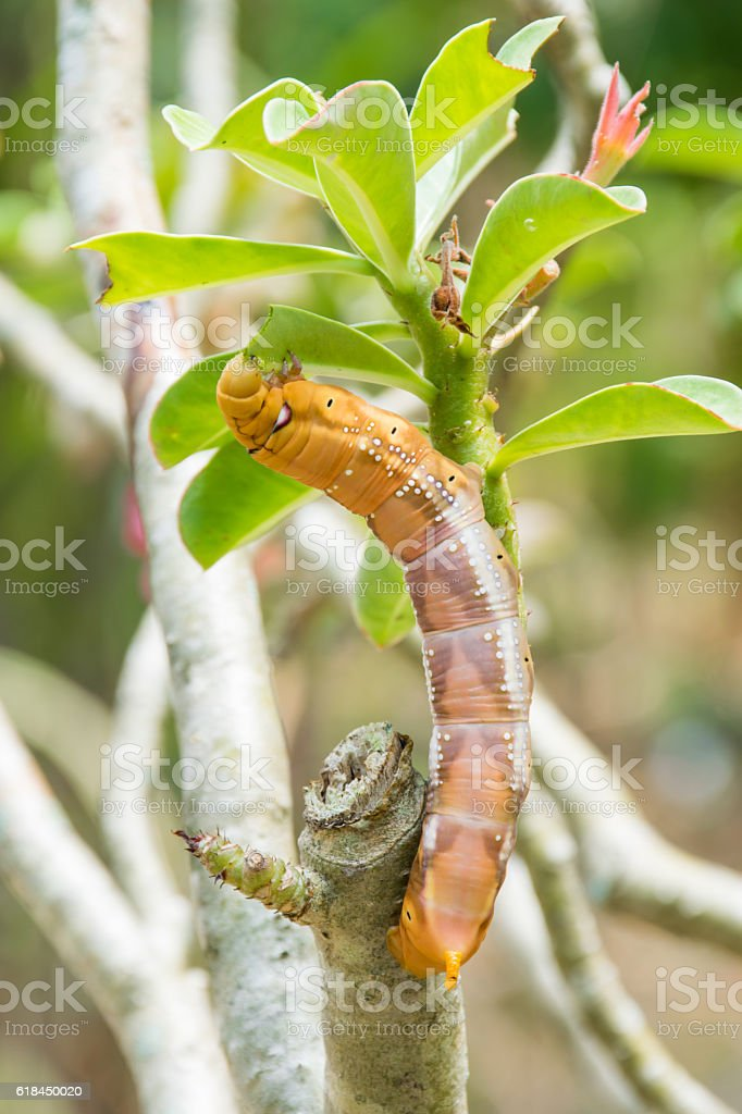 Brown caterpillar stock photo
