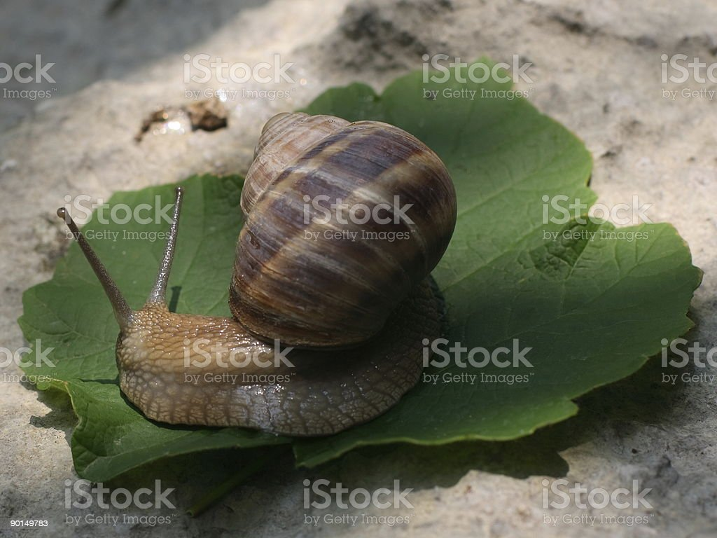 Brown color Snail stock photo