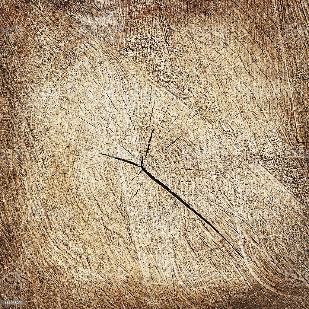 brown cracked tree stump background royalty-free stock photo