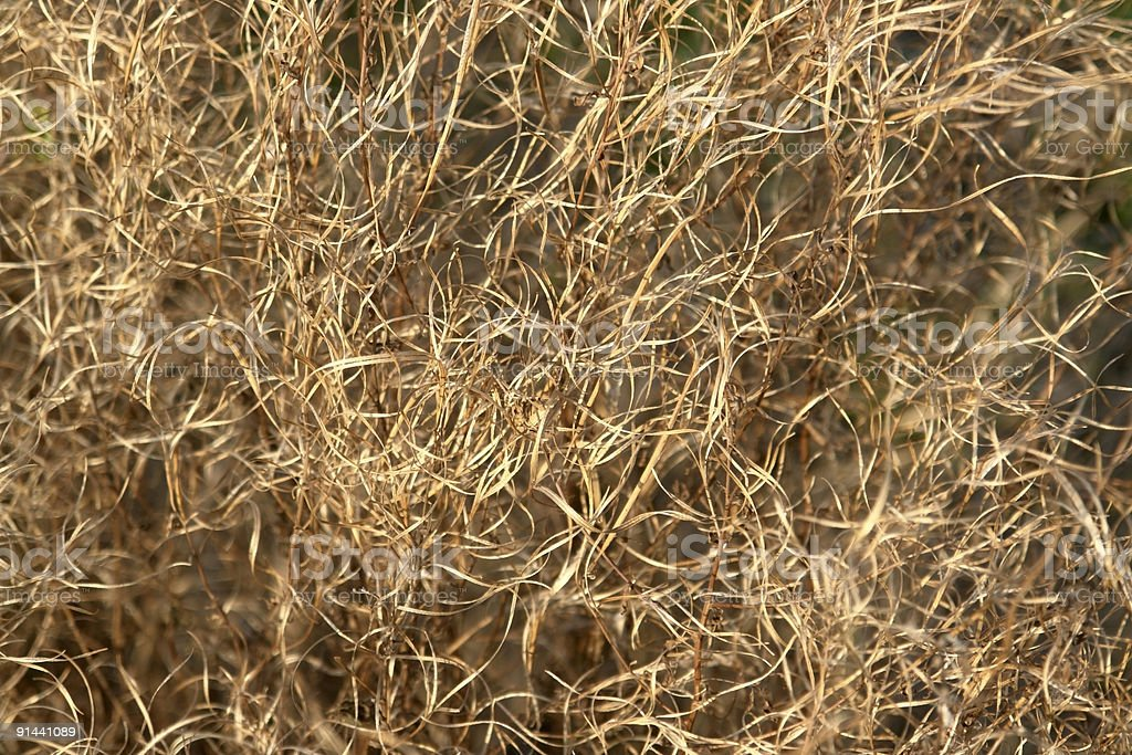 brown curled grass filament stock photo