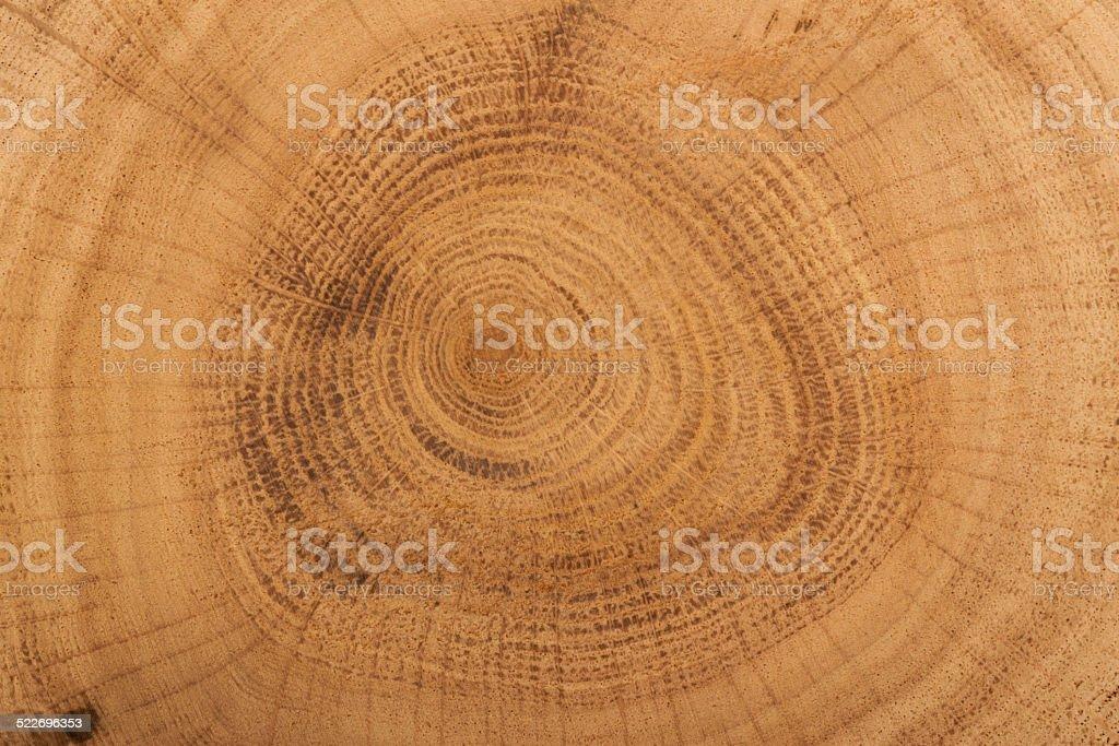 brown cut of tree stock photo