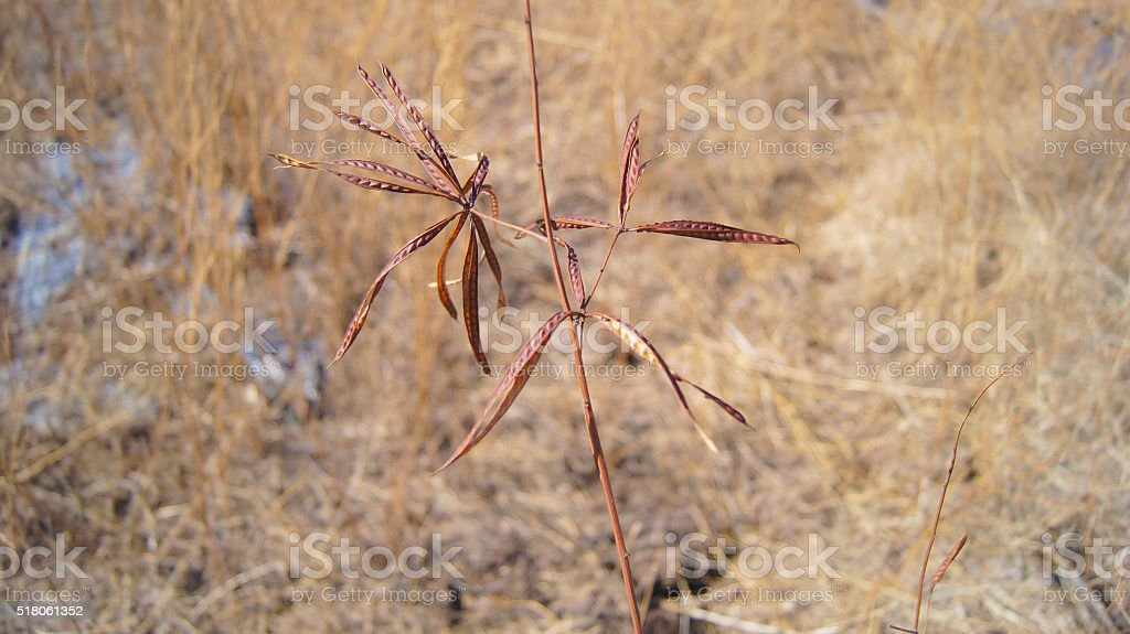 Brown desert plant stock photo