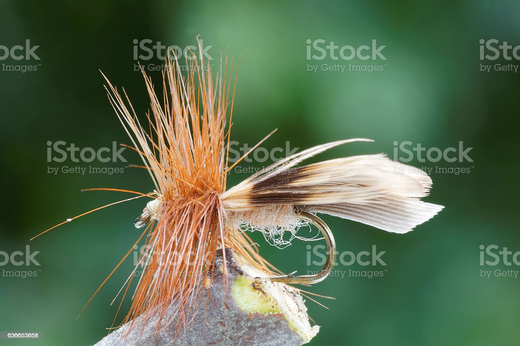 Brown dry fly fishing fly, leafs in background stock photo