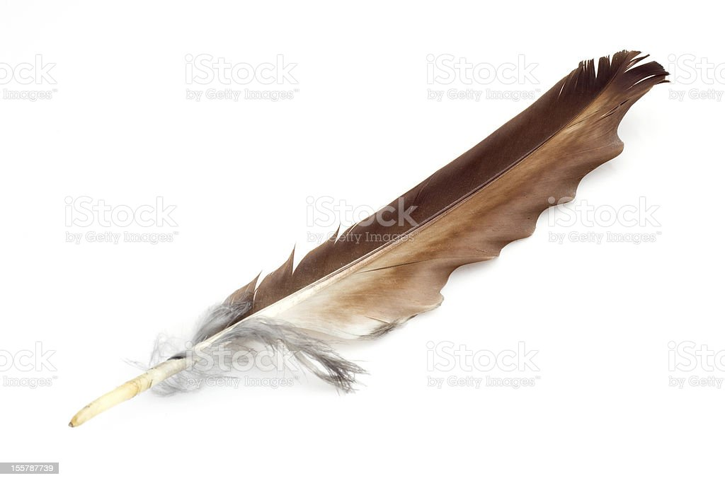Brown eagle feather stock photo