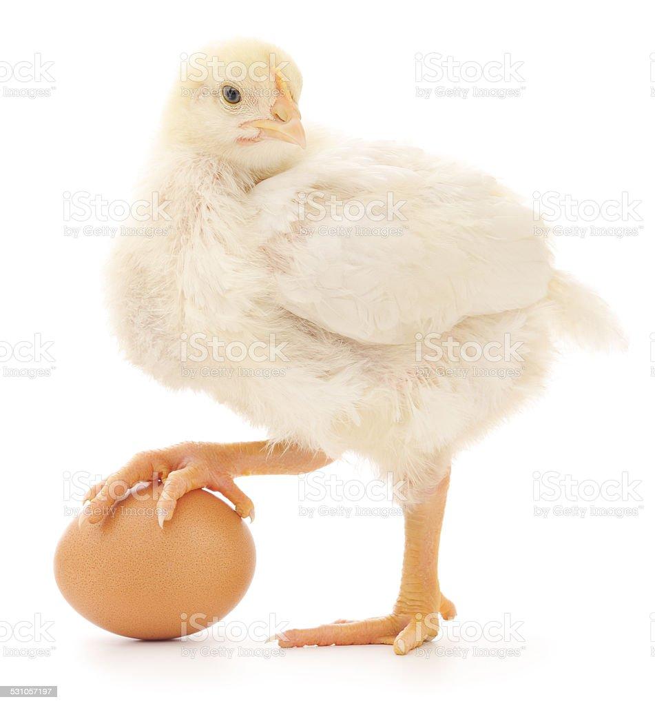 Marrón huevos y pollo foto de stock libre de derechos