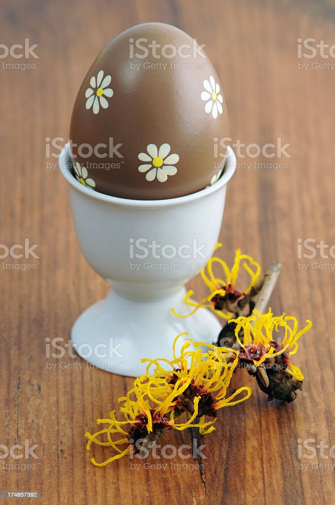 brown Egg in Eggcup with Witchhazle on wooden table stock photo