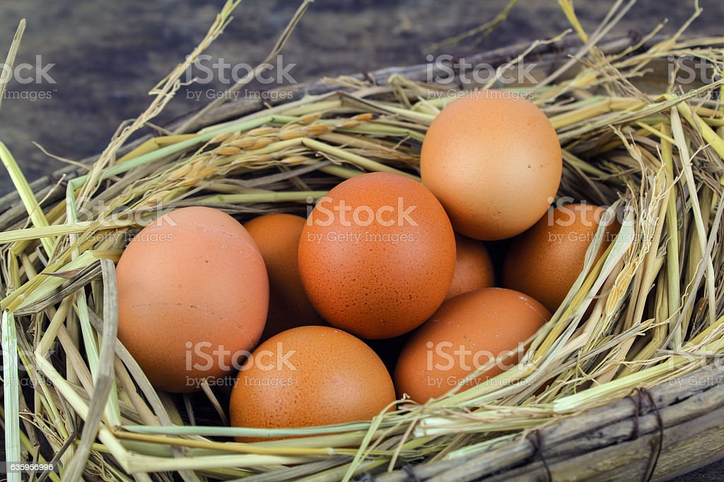 Brown eggs in nest hen eggs on wooden background stock photo