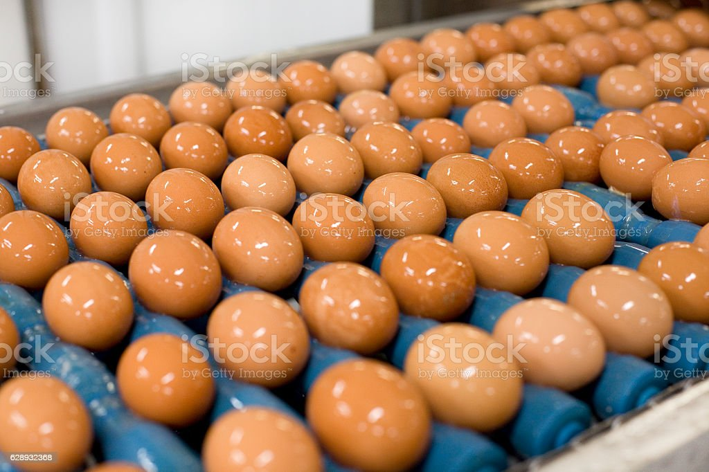 Brown eggs on processing line stock photo