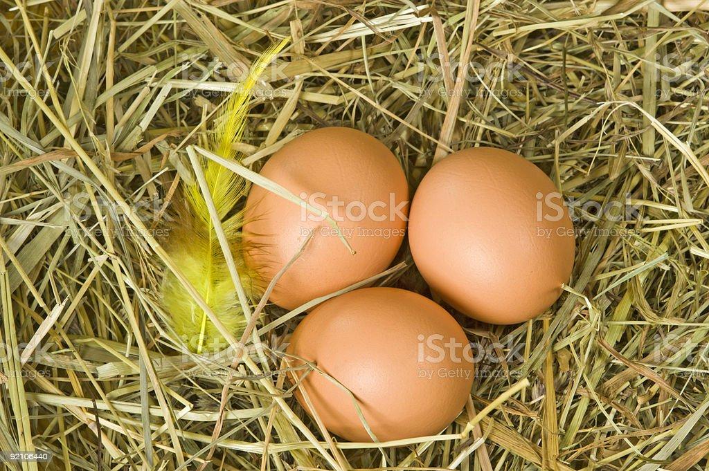Braune Eier stock photo