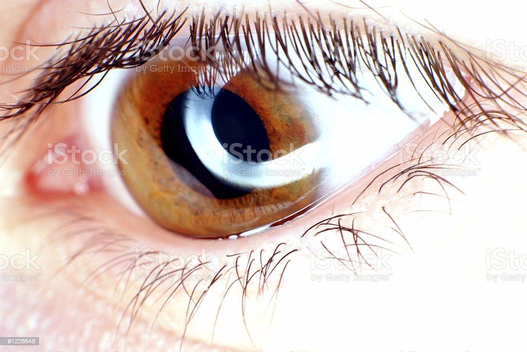 Brown eye royalty-free stock photo