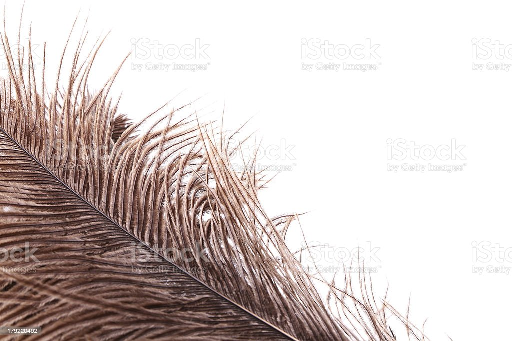 Brown feathers half background royalty-free stock photo