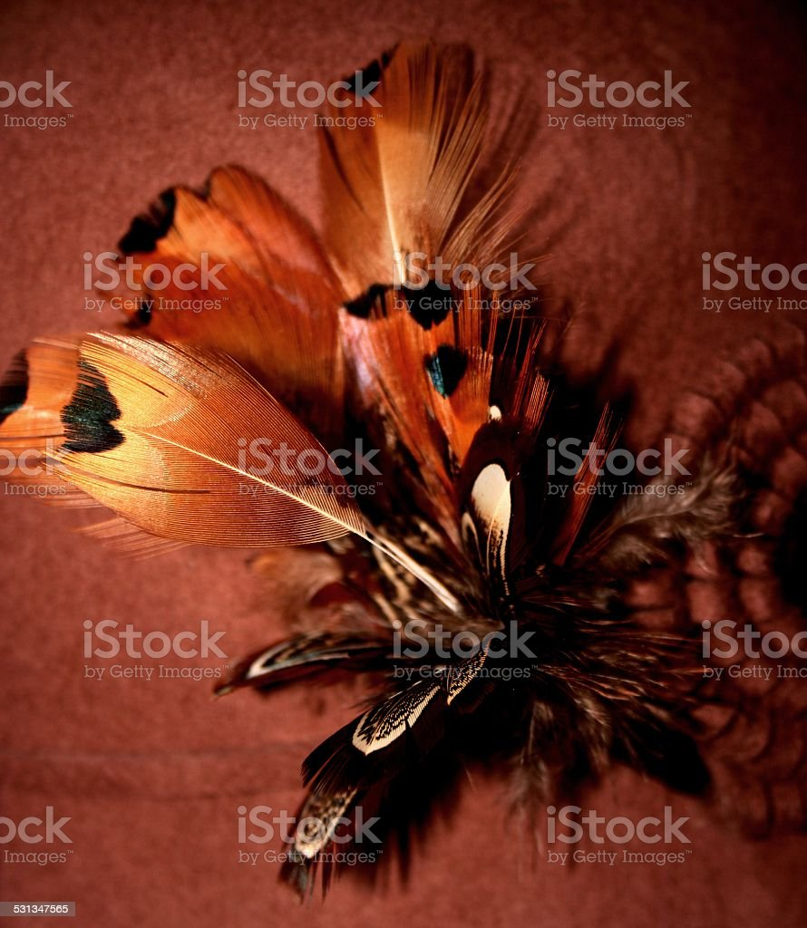 Brown Feathers stock photo