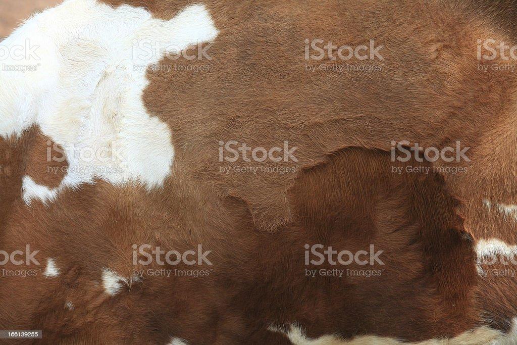 Brown fur carpet stock photo