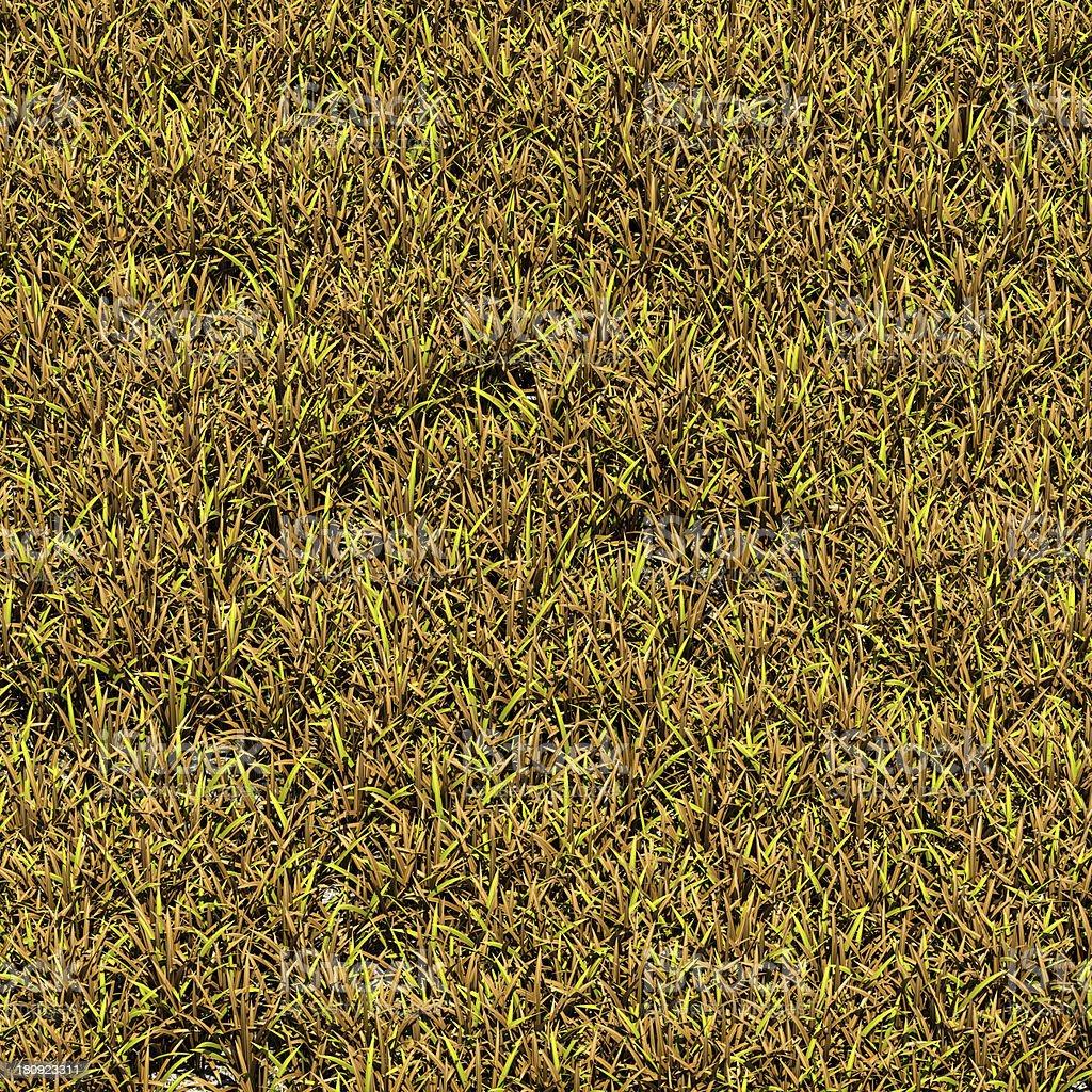 Brown Grass Bird's Eye View royalty-free stock photo