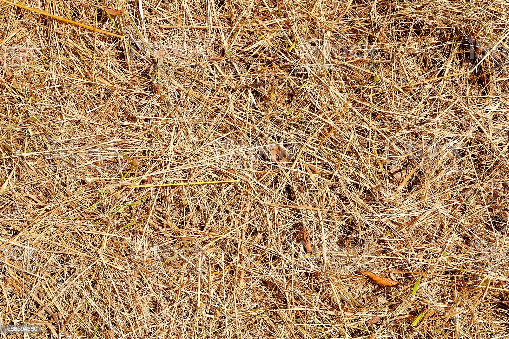Brown grass full frame background dry and burned by sunlight stock photo
