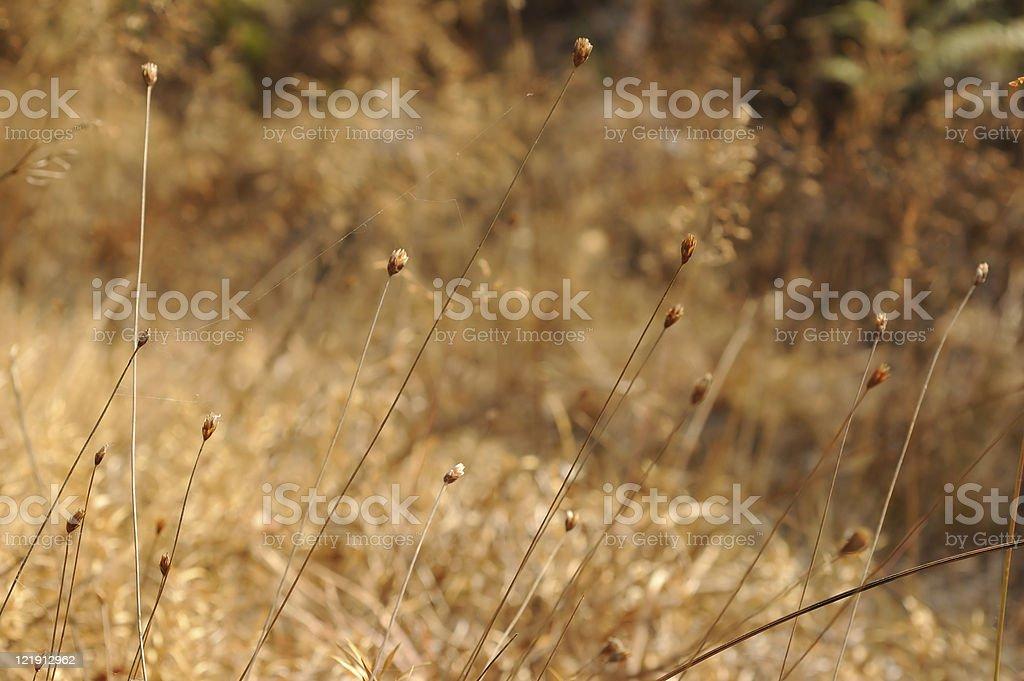 Brown grass stock photo