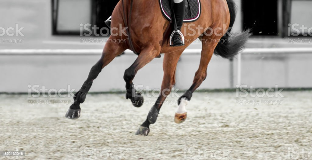 Brown horse and his rider galloping in sunny arena stock photo