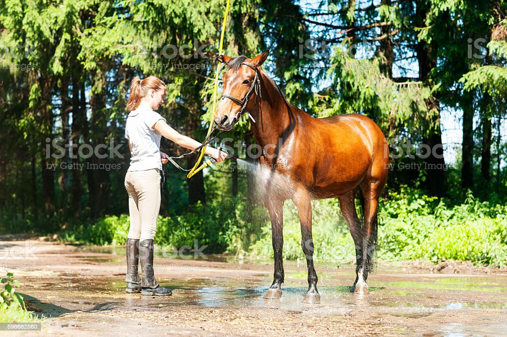 Brown horse enjoying of cooling down in the summer shower stock photo