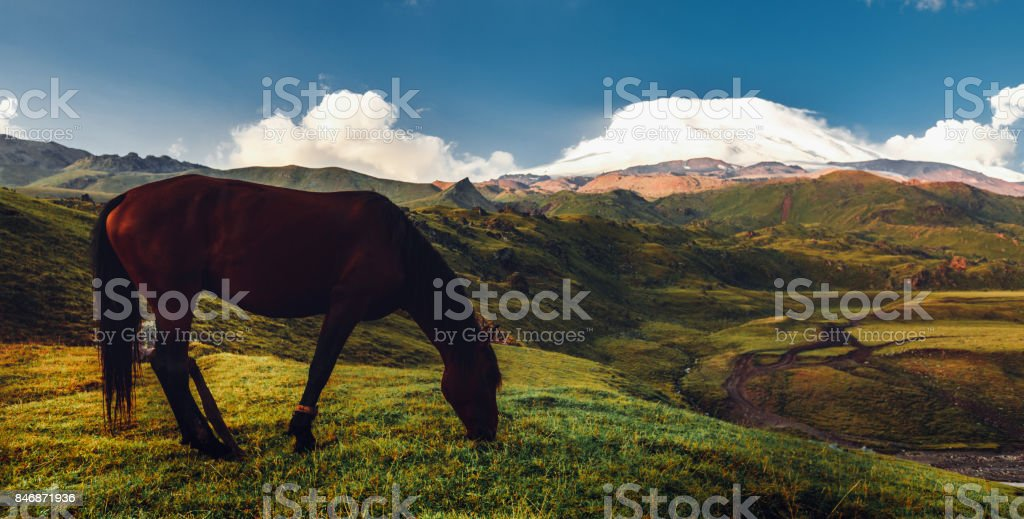 Brown Horse Grazing In Mountain Field Valley On Background Of Mount Elbrus. Rural Countryside Concept stock photo
