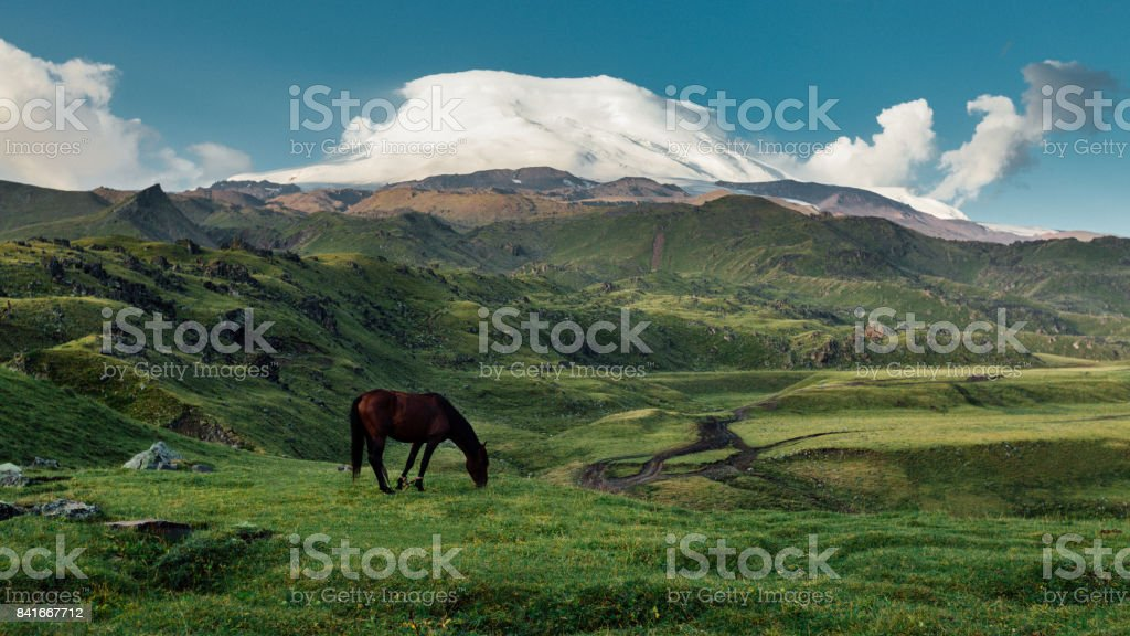 Brown Horse Grazing In Mountain Meadow Valley On Background Of Mount Elbrus stock photo