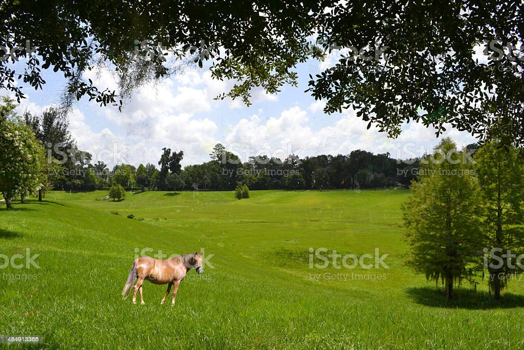 Brown Horse, Green Trees stock photo