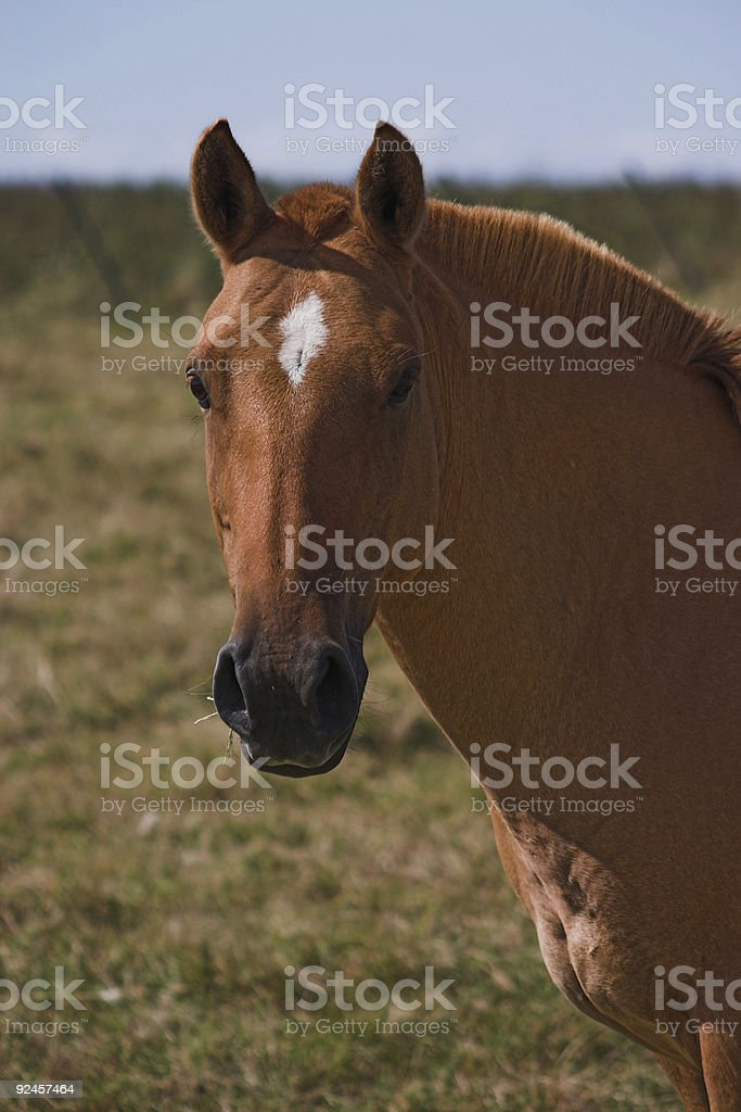 Brown horse head 2 stock photo