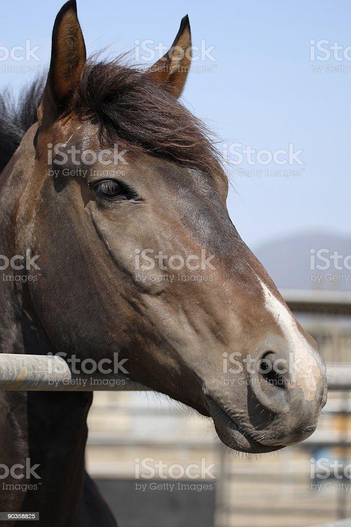 Brown horse in estable foto de stock libre de derechos