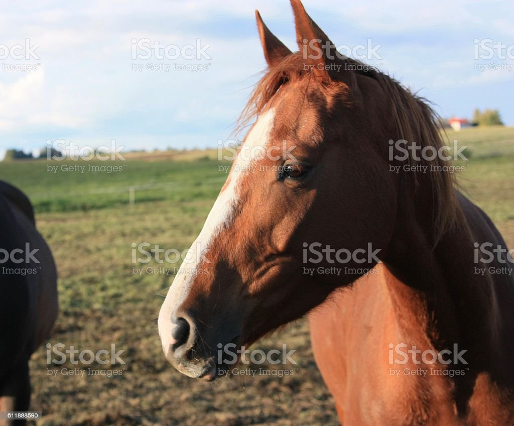 Brown horse in autumn stock photo