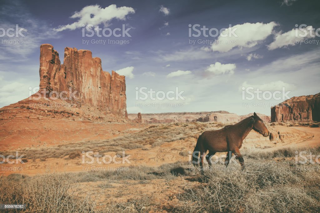 brown horse is running at the monument valley stock photo