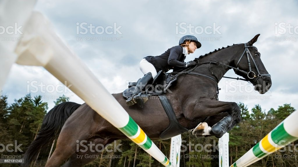 Brown horse jumping an oxer with his rider stock photo
