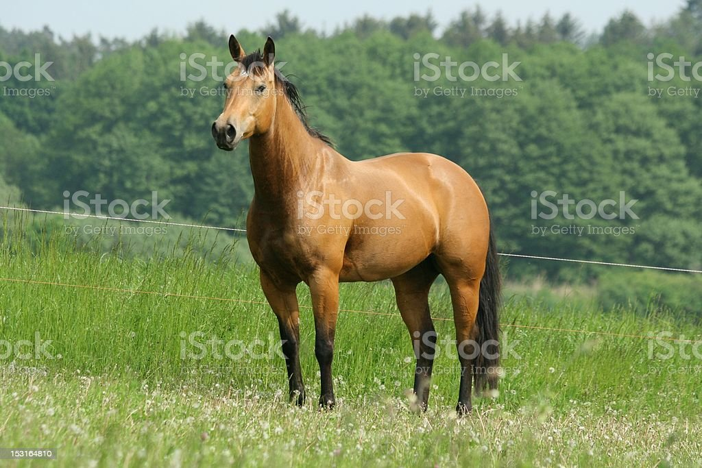 Brown horse looking stock photo
