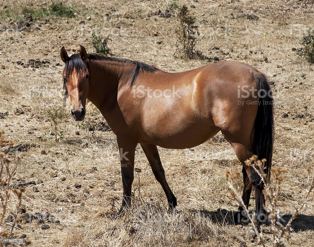 Brown horse on meadow royalty-free stock photo